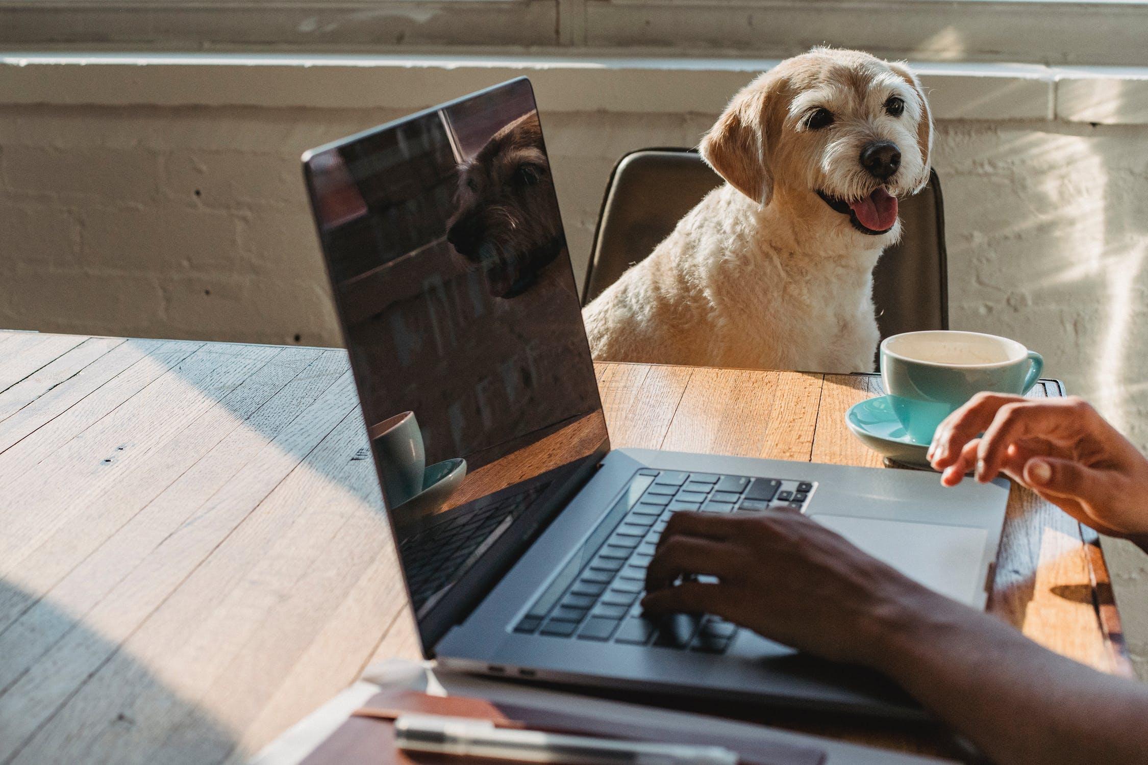 Behind the scenes - meet inSTREAMLY pets!